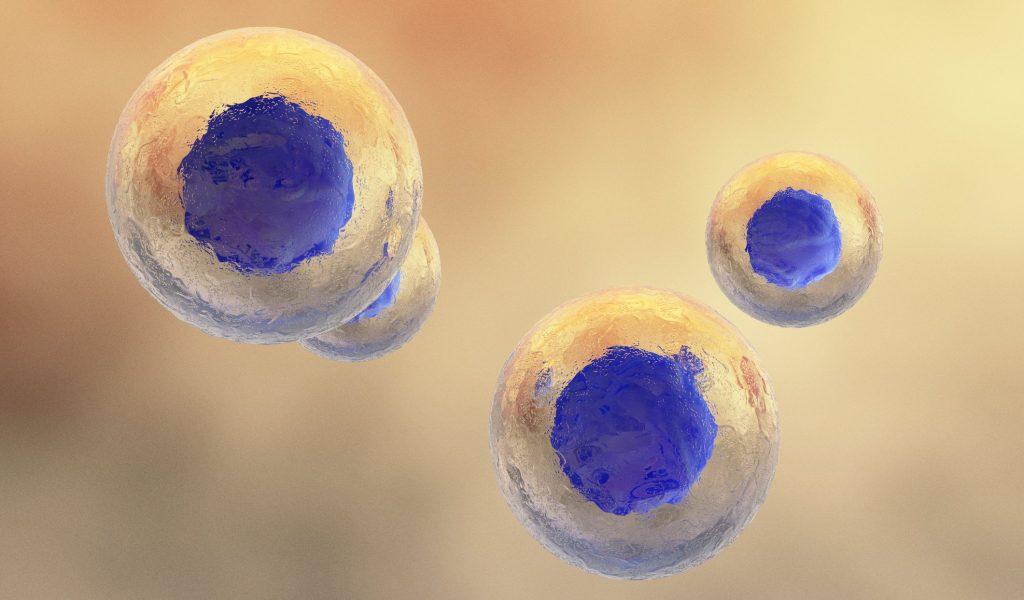 Close-up of biological cells